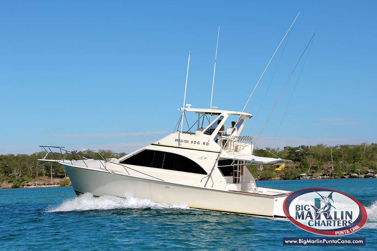 Marlin fishing boat images galleries for Saltwater fishing charters