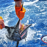 Big Blue Marlin fishing charters Punta Cana Bavaro
