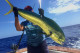 mahi mahi charter Yustas Fortuna Punta Cana big game fishinig excursion