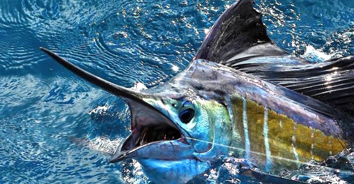 Deep sea Fishing charter Marlin Punta Cana