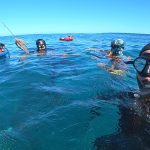 speargun fishing Punta Cana 2020 charter in DR
