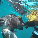 hutning underwater Punta Cana speargun fishes